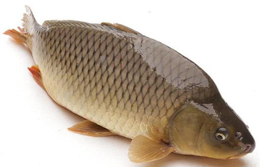 cá chép sông La Ngà