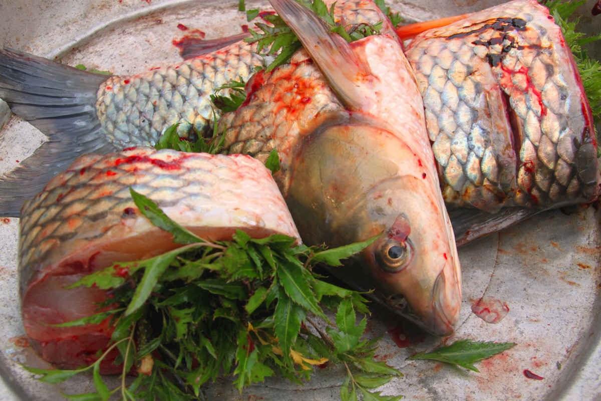 Phải sơ chế cá thật kĩ để loại bỏ đi mùi tanh đặc trưng