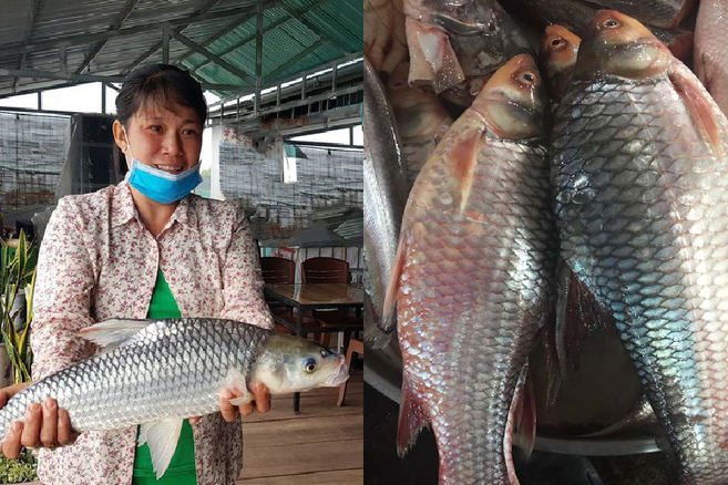 Đặc sản cá cóc sông tiền 1